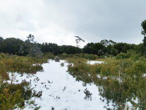 Mt Boobyalla
