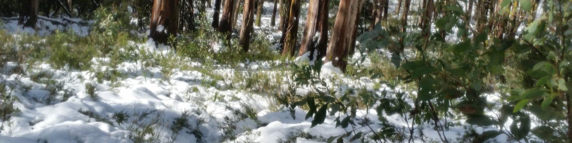 Boobyalla Saddle in snow