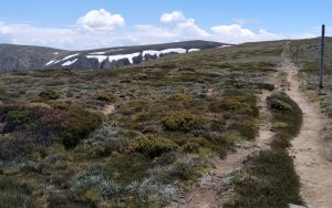 The track towards Mt Bogong