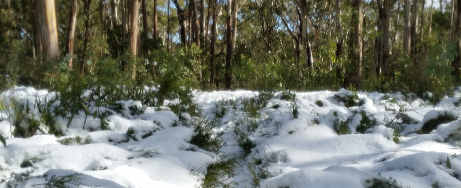Mt Donna Buang in snow